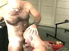 Mature gay sucks cock and licks hairy hole